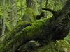 Warscheneck Nature Reserve