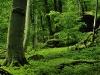 Forest Reserve, Heimliches Gericht