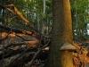 Biosphere Park Vienna Wood