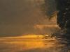 Danube Floodplain - Donau Au