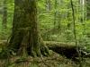 Wilderness Area Duerrenstein_Rothwald