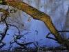 March Floodplain Forest - March Au