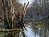 March Floodplain Forest - March Au
