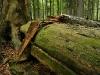 Neuwald Forest