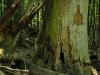 Biosphere Park Vienna Wood; Johannser Kogel Lainzer Tiergarten