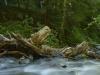 Wild Fagaras - Romania