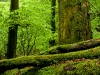 Dobra Ancient Forest