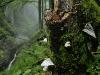 Duerrenstein Natural Forest