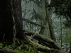 Wild Forest World - Lunz
