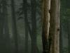 Mystic Forest Wilderness, Lower Austria