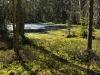 Peat Bog Forest in Lower Austria