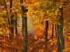 Natural Forests in Autumn, Vienna