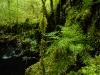 Rainforest Stream, Chilean Pumalin Park