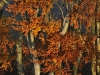 Wienerwald in Autumn Light