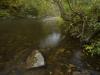 Green River Peace