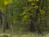 Hardwood Floodplain Forest
