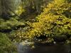 Nature in Waldviertel, Kamptal
