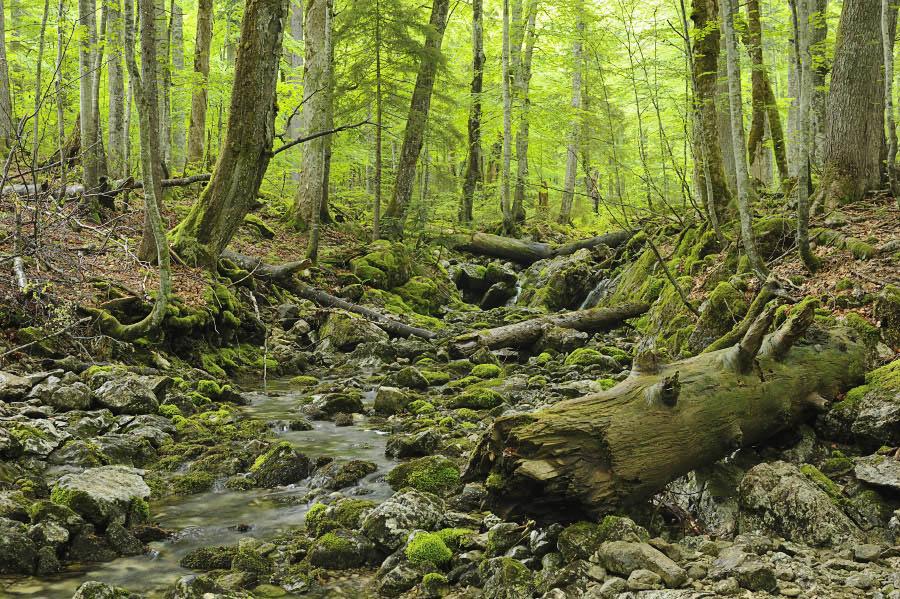 "New Book: ""Unser Urwald"" – Virgin Forests : Schickhofer-Photography"