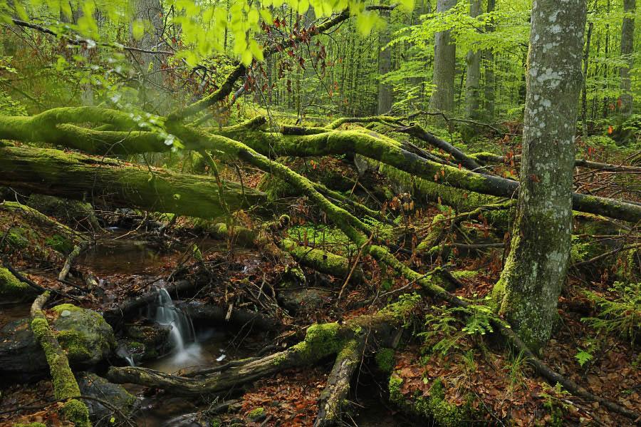 urwälder in europa