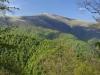 Uholka - Shyrokyi Luh Forest, Ukraine