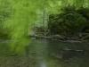 Virgin Forest in Ukraine