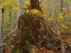 Stuzica Virgin Forest
