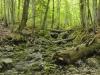 Virgin Forest Rothwald, Lower Austria