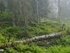 Virgin Forest Bödmeren, Switzerland