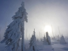 After the Blizzard, Bavarian Forest National Park