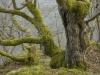 Virgin Forest Remnant in Kellerwald National Park