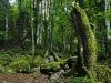 RO-21: Mystic Wilderness