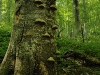 RO-02: Ancient Forest, Domogled NP