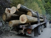 RO-08: Ancient Forest Destruction in Domogled NP