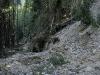 RO-10: Ancient Forest Destruction - Logging in Rau-Ses Valley in Retezat NP