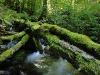RO-04: Ancient Forest - Wild Valley in Retezat NP