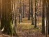 Romania Wilderness