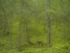 Bergwald im Loigistal - Warscheneck