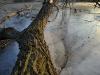 Fallen Log in Prater Garden