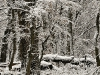 Winter View of Vienna\'s Natural Forests