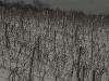 Vienna\'s Edge, Wineyards at