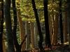 Austria / Vienna - Vienna Forest / Wienerwald