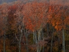 Austria / Vienna / Wienerwald - Colors of Fall