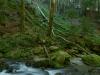 Wilderness of Romania