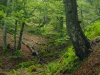Primeval Forest of Romania