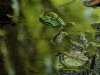 Micro Waterscape, Vienna Forest