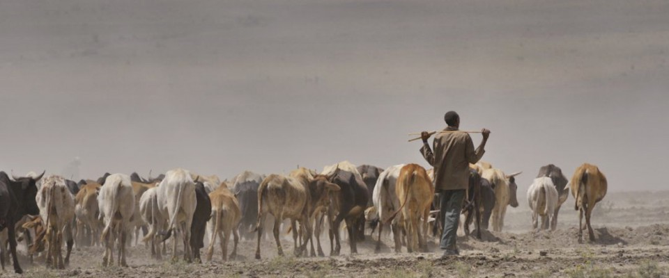 Kenya - Severe drought in 2009, Masai herders walk for water
