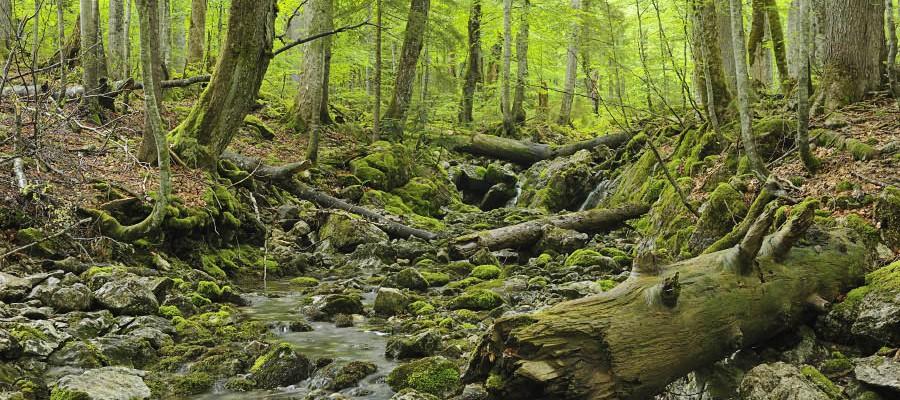 """Tolkiens Lothlorien in the Alps? Ancient forest """"Rothwald"""" in Lower Austria. (c) Matthias Schickhofer"""