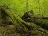 Urwaldlandschaft in Österreich - Naturwald bei Weitra