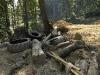 RO-11: Lumberjack\'s Waste in Domogled NP.