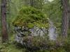 Wildnis im Loigistal - Warscheneck